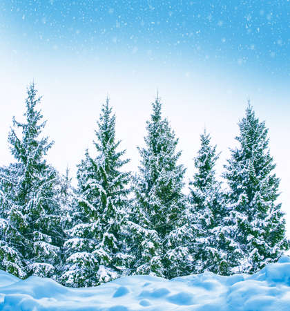 Photo for Frozen winter forest with snow covered trees. outdoor - Royalty Free Image