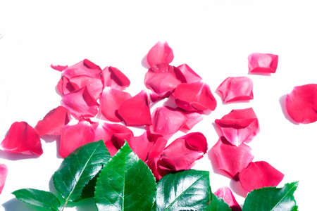 Photo for Bright pink rose petals. Natural floral background. - Royalty Free Image