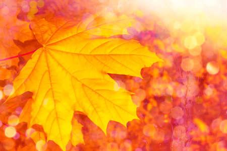 Photo pour autumn landscape with bright colorful leaves. Indian summer. foliage. - image libre de droit