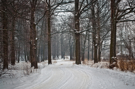 The winter road with traces from cars the leader through the wood.