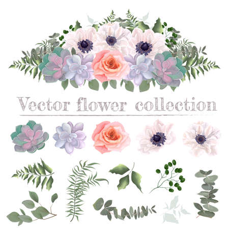 Illustration pour Vector flower border. Pink roses, white anemones, succulents, eucalyptus, green plants and flowers. All elements are isolated on a white background. - image libre de droit