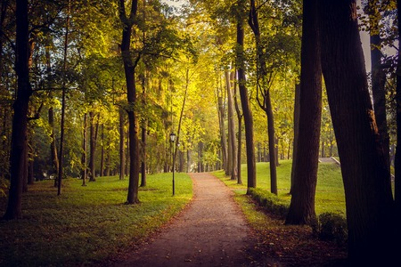 Photo pour Morning autumn park. Picture autumn park. Park at sunrise in the fall. Sunny morning. Beginning of autumn. September Just started to fall leaves in the park - image libre de droit
