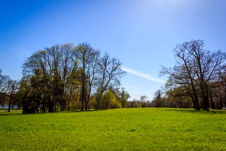 Foto de Spring Park. Park in May. Park in spring in sunny weather. - Imagen libre de derechos