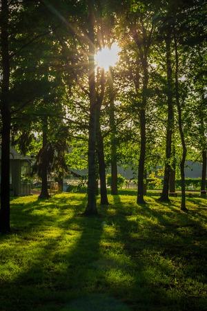 Foto de Spring evening park. City Park. Russian green park. Silence in the city park. - Imagen libre de derechos