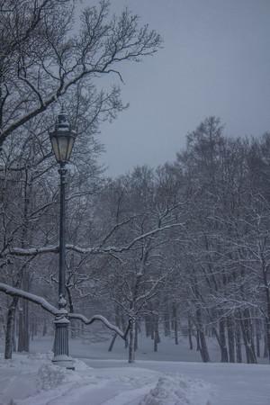Overcast snowy evening park. It's a nasty day. Snow park. Picture winter park. Winter landscape. Winter nature