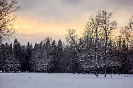 Photo pour Winter Park. Snow park. Picture winter park. Winter landscape. Winter nature - image libre de droit