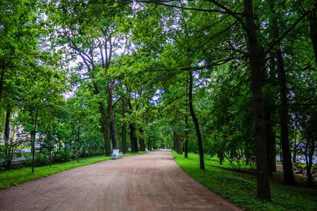 Foto de Alley green in the park. Background summer park. Russian well-groomed park. Beautiful alleys of the park - Imagen libre de derechos