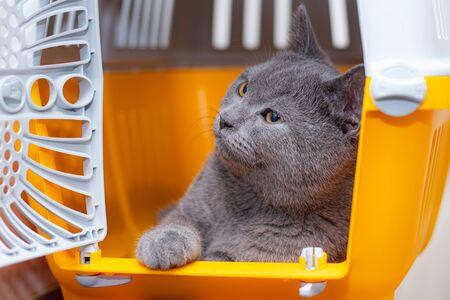 Foto de The cat is sitting in an animal carrier . Pet. Transportation of animals. Article about animal transportation. The safety of a pet. Grey British cat - Imagen libre de derechos