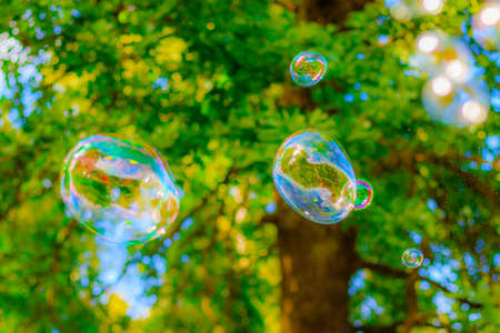 Photo pour Background soap bubbles on the background of trees. Beautiful color background. Copy space. The concept of a children's holiday and a happy childhood. Bright background concept. Bubbles - image libre de droit
