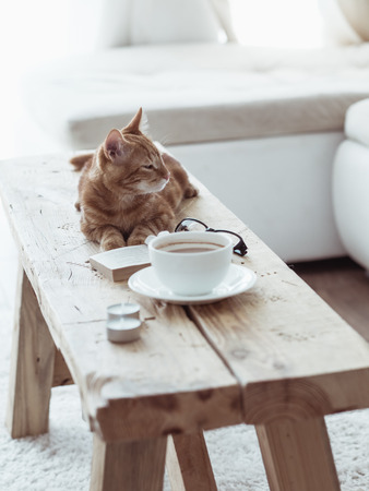 Photo for Still life details, cup of coffee on rustic bench and a cat lying down on it in white cottage room - Royalty Free Image