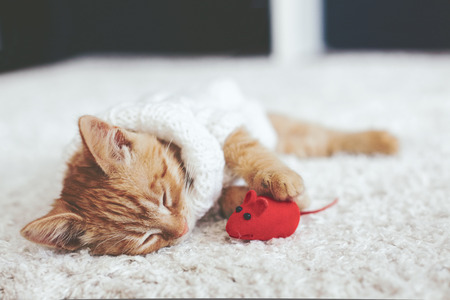 Cute little ginger kitten wearing warm knitted sweater is sleeping with pet toy on white carpet