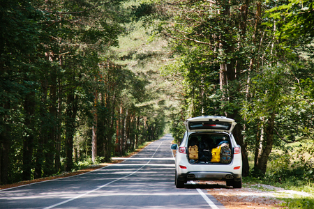 Car with full trunk of backpacks on a forest road among trees