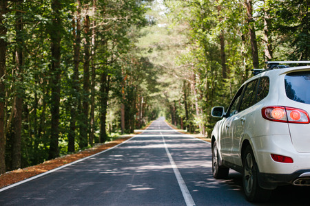 Driving car on a forest asphalt road among trees
