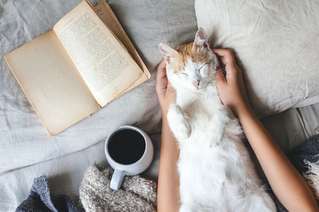 Foto de Cute ginger cat is sleeping in the bed on warm blanket. Cold autumn or winter weekend while reading a book and drinking warm coffee or tea. Hygge concept. - Imagen libre de derechos
