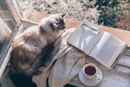 Photo pour Cats sleeping in warm sunlight on the window sill by opened book, cup of tea or coffee, glasses and knitted sweater. Cozy spring weekend concept. The text on pages is not recognizable. - image libre de droit