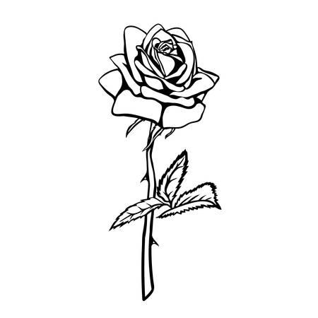 Illustration pour Rose sketch. Black outline on white background. Vector illustration. - image libre de droit