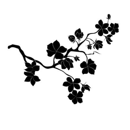 Illustration for twig sakura blossoms. Vector illustration. Black Silhouette - Royalty Free Image