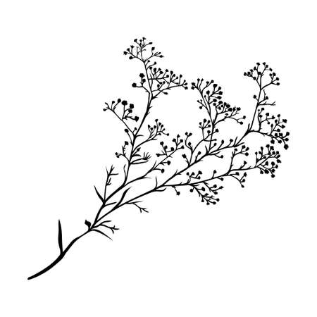 Ilustración de Branch of beautiful hand-drawn silhouette gypsophila in black and white colors. Vector illustration - Imagen libre de derechos