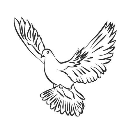 Ilustración de Flying dove vector sketch. Dove of Peace. SVector illustration - Imagen libre de derechos