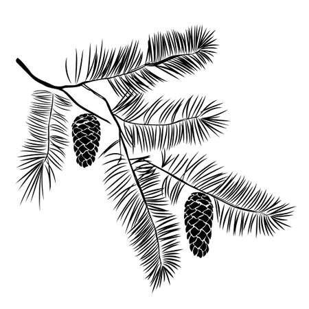 Illustration pour Hand drawn pine tree branch isolated on white background. Ink illustration in vintage engraved style. - image libre de droit