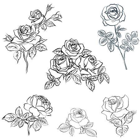 Illustration for Set Rose sketch. - Royalty Free Image