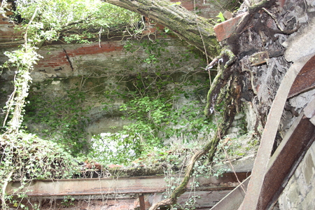 nature and greenery seize and cover ancient forgotten medieval and military buildings. secular buildings now lost in the memory of the forest and the jungle