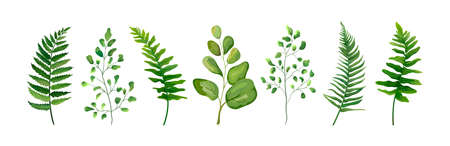 Illustration pour Vector designer elements set collection of green forest fern frond maidenhair greenery art foliage natural leaves herb in watercolor style collection. Decorative beauty elegant illustration for design - image libre de droit