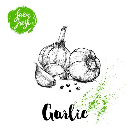 Illustration pour Hand drawn sketch garlic group with black pepper. Fresh farm food vector illustration. Farm vegetables poster. - image libre de droit