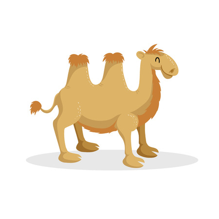 Cartoon trendy design bactrian camel. African desert animal. Wildlife and zoo vector illustration icon. のイラスト素材