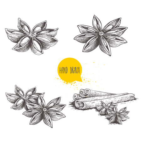 Ilustración de Anise star sketches set. Single, batch and composition with cinnamon sticks. Herbs and condiment retro style hand drawn collection. Vector illustrations isolated on white background. - Imagen libre de derechos