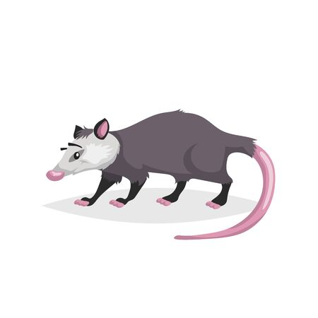 Illustration pour Cute cartoon opossum. North America wild animal. Vector drawing for kid and child books. Isolated on white background. - image libre de droit