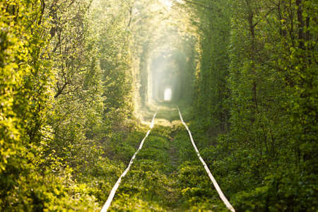 Natural tunnel of love formed by trees in Ukraine, Klevan