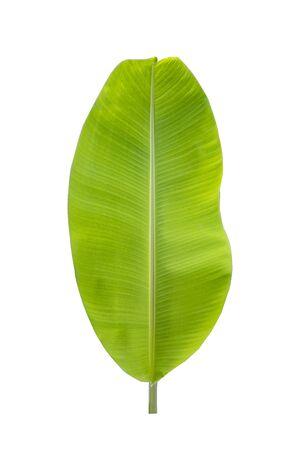 Photo pour Isolate of banana leaf on white background - image libre de droit