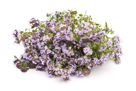 Herbal medicine:Thyme (Thymus serpillum)