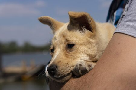 Photo pour Puppy held in arms by his owner. Cute, adorable baby animals - image libre de droit