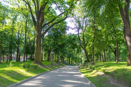 Foto de Alley in the Park on a summer morning - Imagen libre de derechos