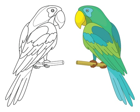 Bird parrot sits on a wooden perch, colored and black contour on white background
