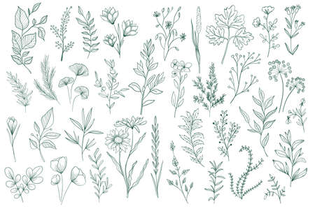 Illustration for Bundle of hand drawn floral decorative elements. Botanical clipart, floral design pack. Green leaves, flowers, herbs and branches vector illustration. Perfect for wedding invitations, greeting cards. - Royalty Free Image