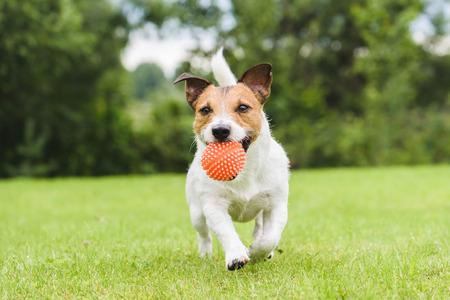Foto de Funny pet dog playing with orange toy ball - Imagen libre de derechos