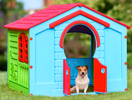 Happy pet sitting in colorful dog house (made from kid playground house)