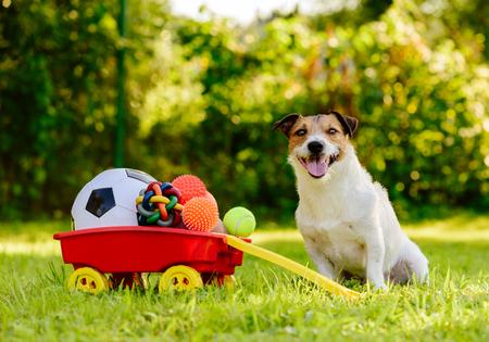 Photo pour Happy dog ??sitting near wheelbarrow full of real treasures - various kinds of balls - image libre de droit
