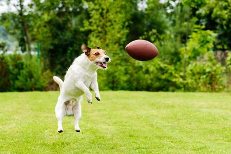 Foto de Leisure time at back yard with american football ball and pet - Imagen libre de derechos