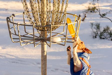 Foto de Stalemate tough situation at disc golf playground - Imagen libre de derechos