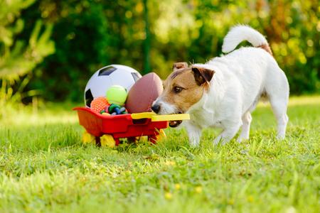 Foto de Sportive dog fetches collection of balls and toys in cart - Imagen libre de derechos