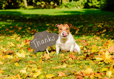 Foto de Thanksgiving concept with dog on fall leaves and plate with thanks word on it - Imagen libre de derechos