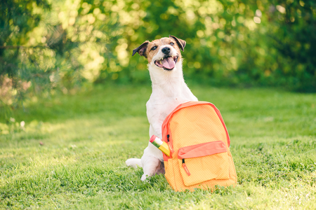 Photo pour Welcome back to school concept with dog - image libre de droit