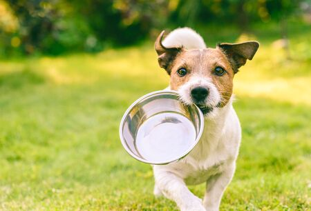 Foto de Hungry or thirsty dog fetches metal bowl to get feed or water - Imagen libre de derechos