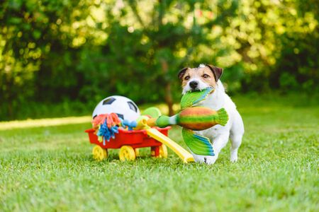 Photo pour Dog fetches toy duck bird from cart full of pet toys and sport balls - image libre de droit