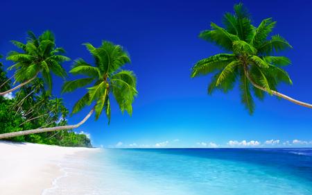 Tha palms on the white sandy beach