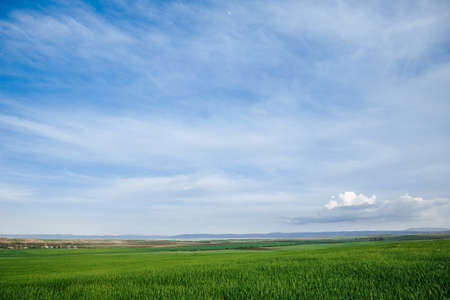 Photo pour Green field and sky with clouds, grass in spring background, agricultural cereal crop - image libre de droit